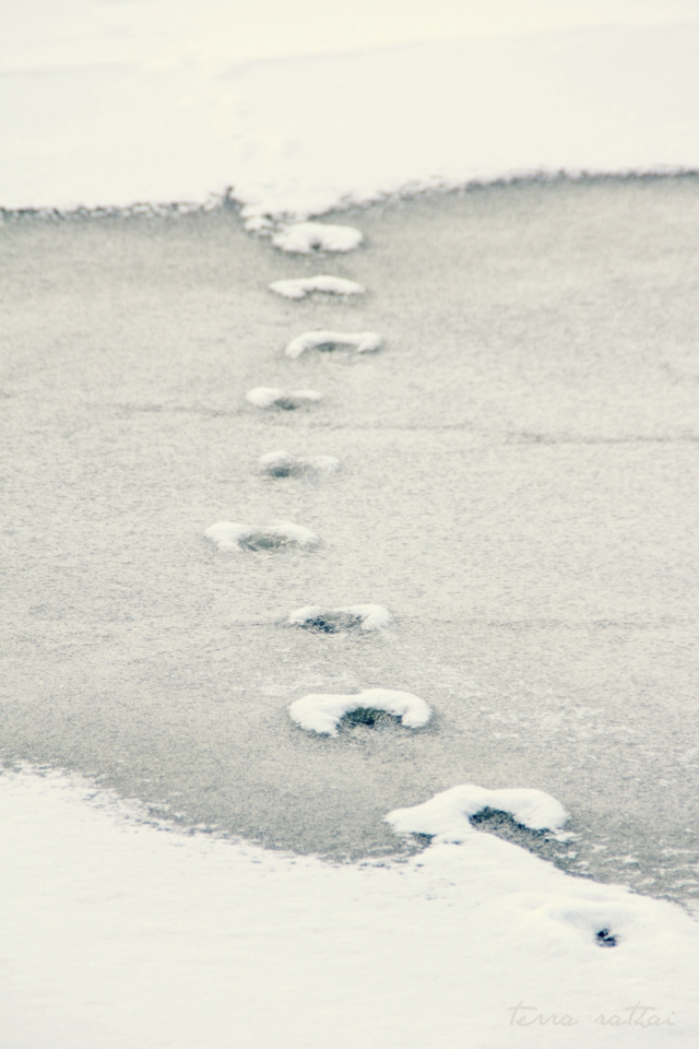 online031317_snowy-tracks-on-ice