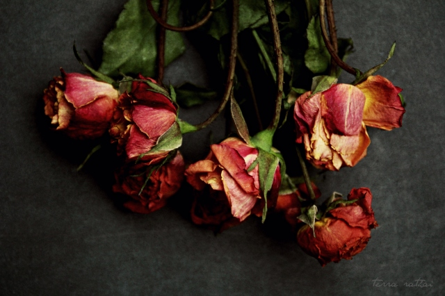 onlines-all-the-red-roses