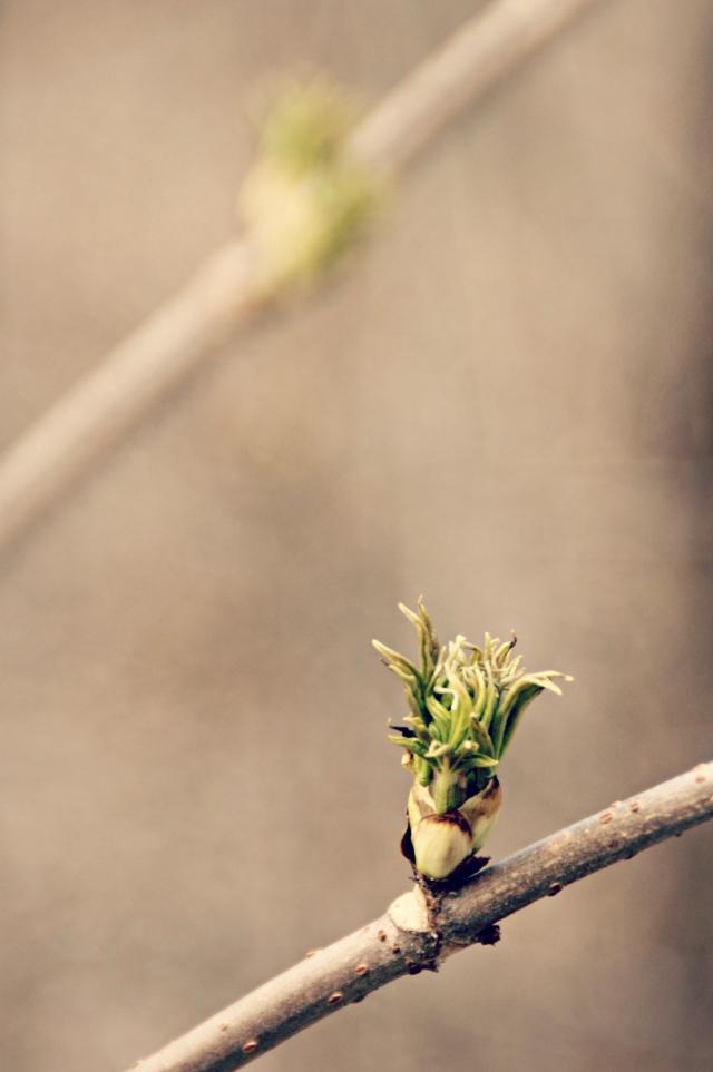 online_tree-buds