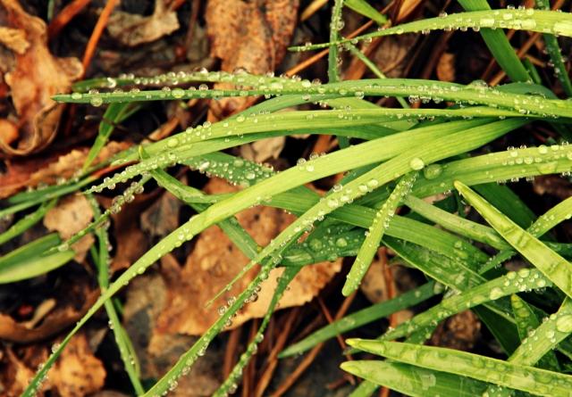 online-raindrops