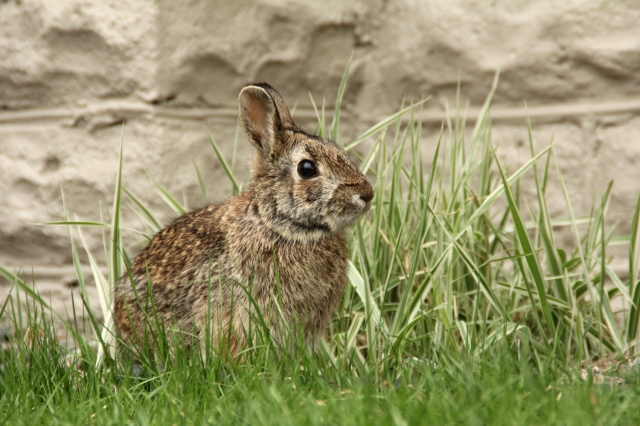 online041917_bunny